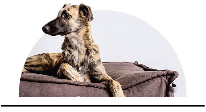 luxusní pelíšky pro psy designové