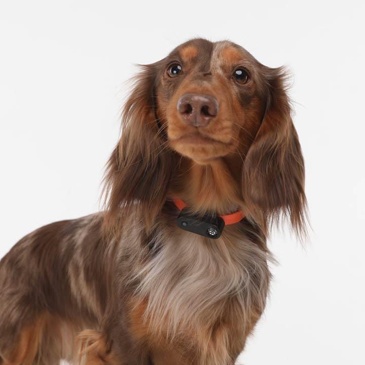 TicklessMini Přívěsek proti klíšťatům Black pro psy