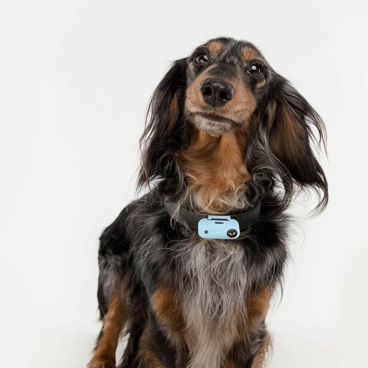 TicklessMini Přívěsek proti klíšťatům Blue pro psy