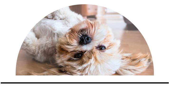 Hygienické přípravky pro psy
